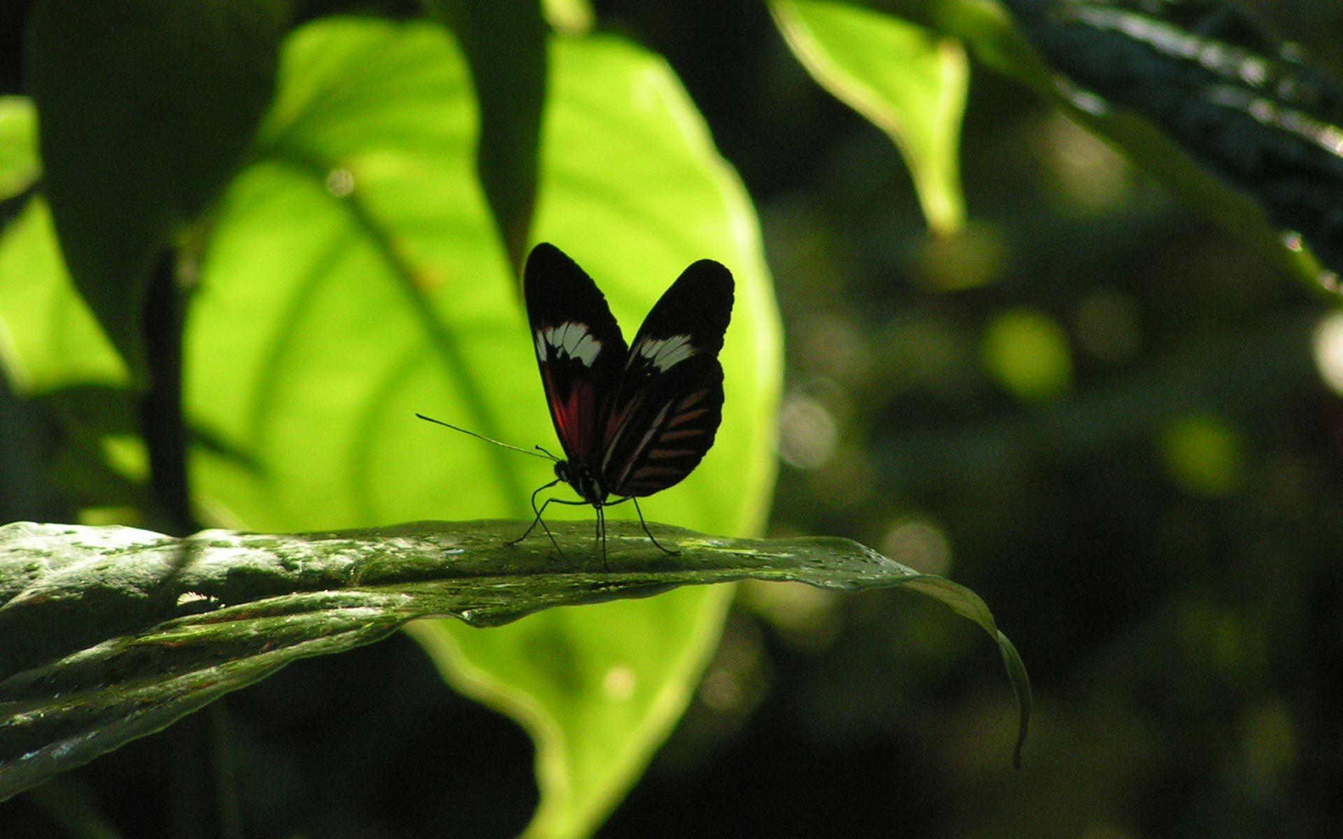 40270 скачать обои Бабочки, Насекомые - заставки и картинки бесплатно
