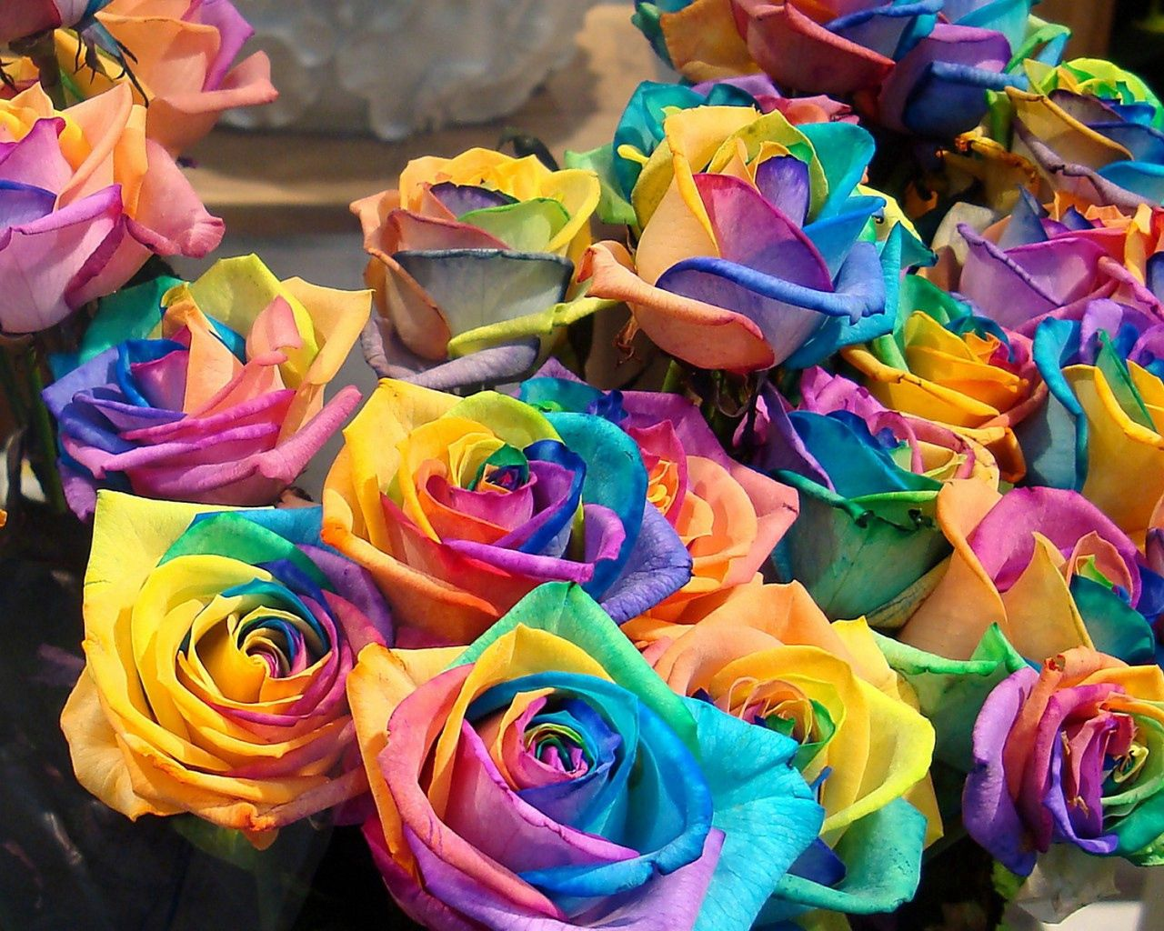 150626 download wallpaper Flowers, Roses, Bright, Multicolored, Buds screensavers and pictures for free