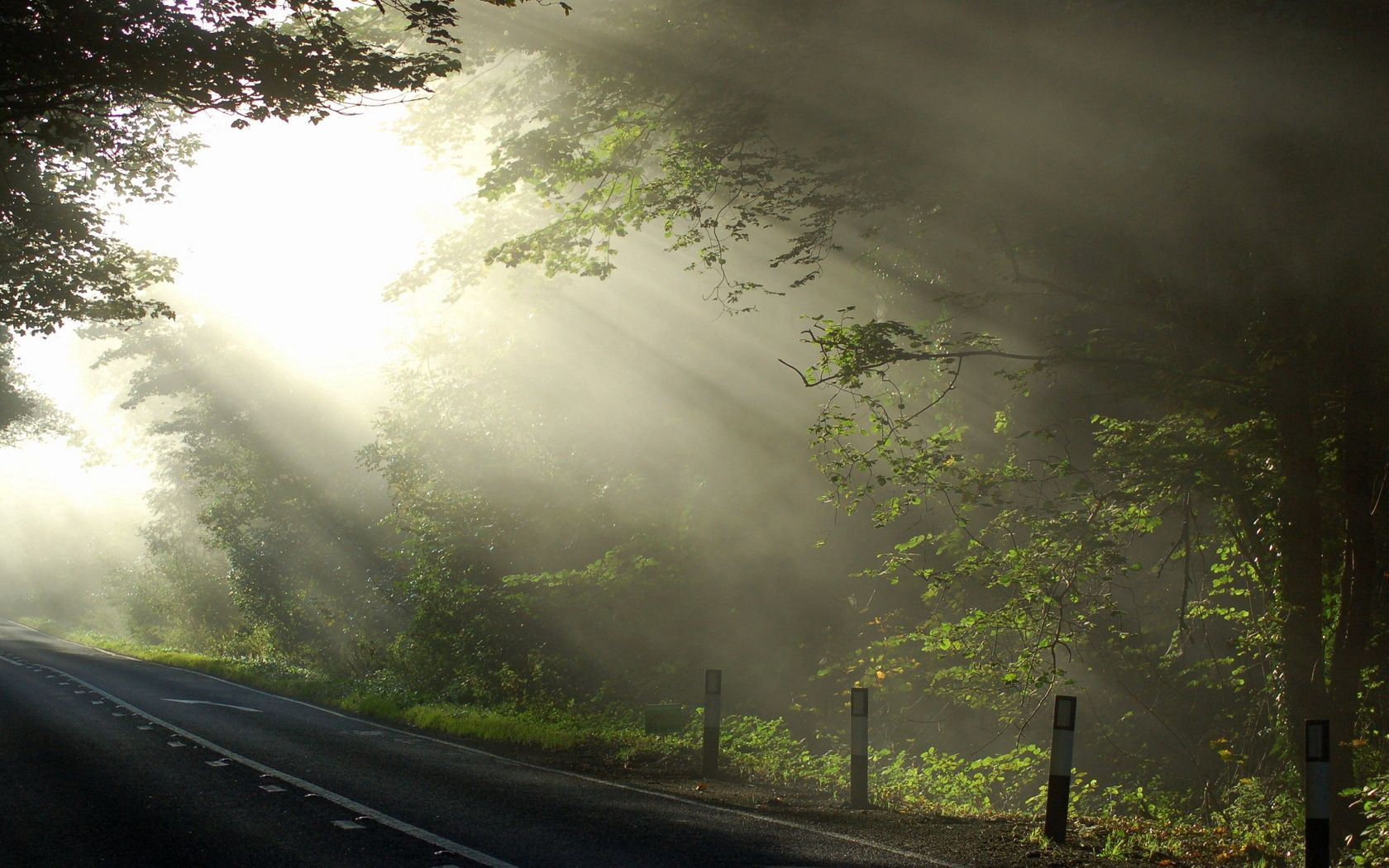 80828 download wallpaper Nature, Beams, Rays, Morning, Road, Branches, Branch, Wood, Tree, Markup, Cool, Coolness, Sun screensavers and pictures for free