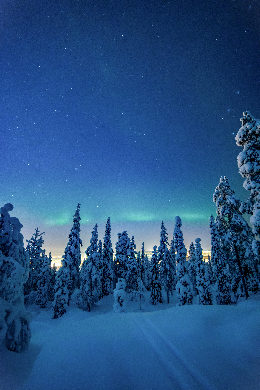 70756 скачать обои Зима, Ночь, Пейзаж, Природа, Деревья, Снег - заставки и картинки бесплатно