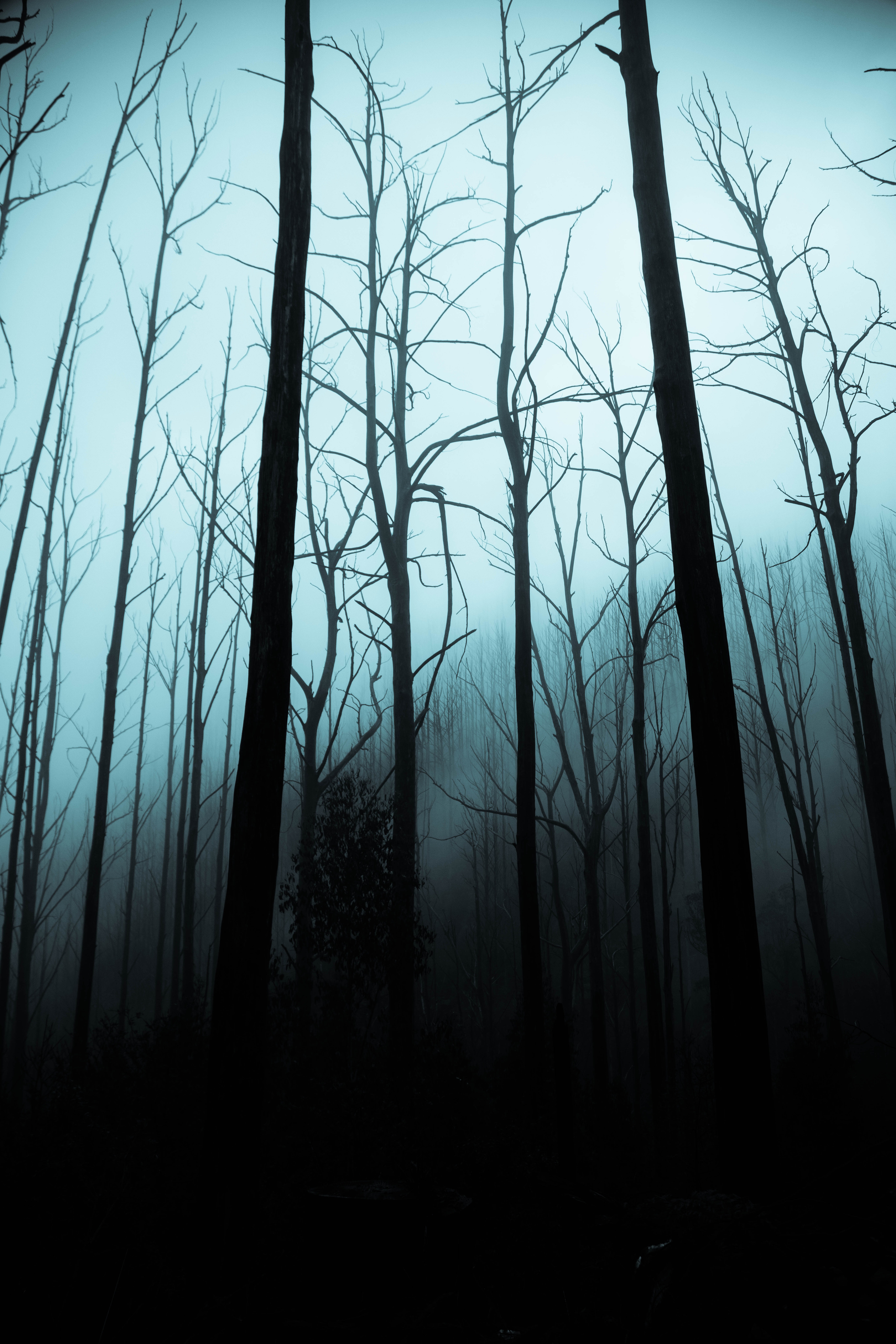 111208 download wallpaper Night, Trees, Dark, Forest, Fog, Gloomy screensavers and pictures for free