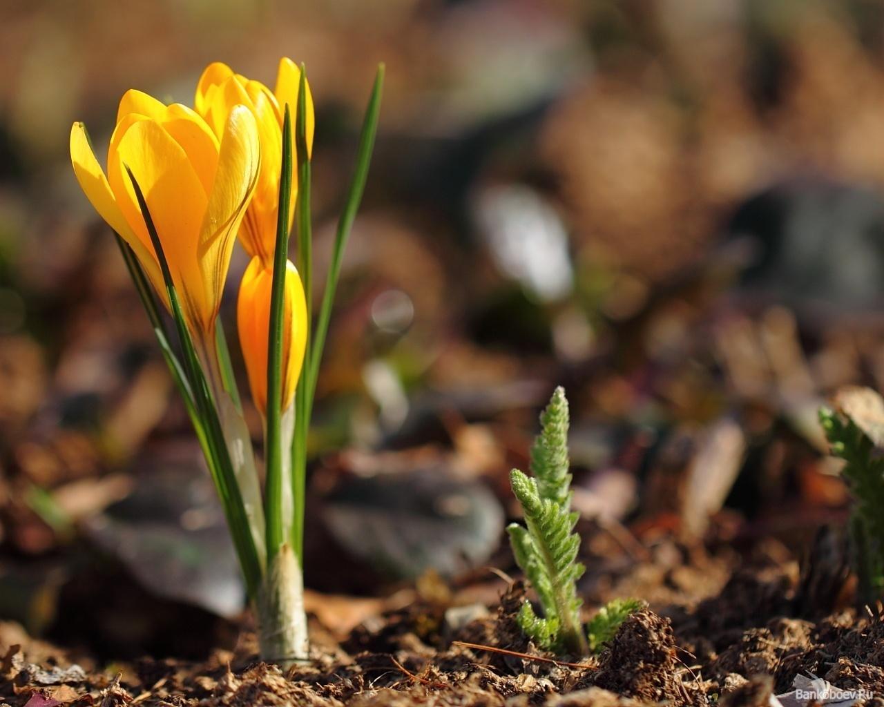 20098 скачать обои Растения, Цветы - заставки и картинки бесплатно