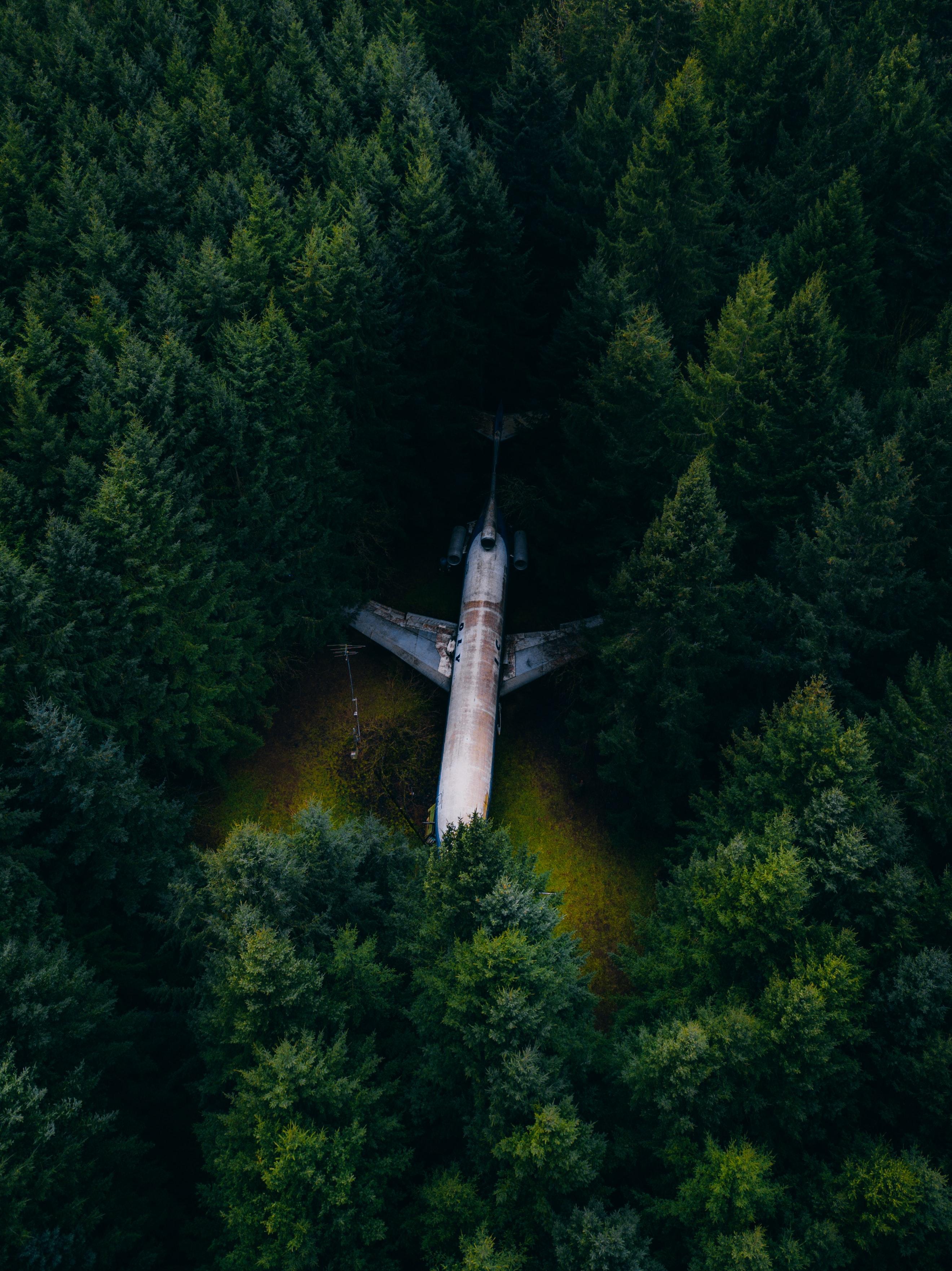 65196 скачать обои Разное, Самолет, Лес, Вид Сверху, Деревья, Елки - заставки и картинки бесплатно