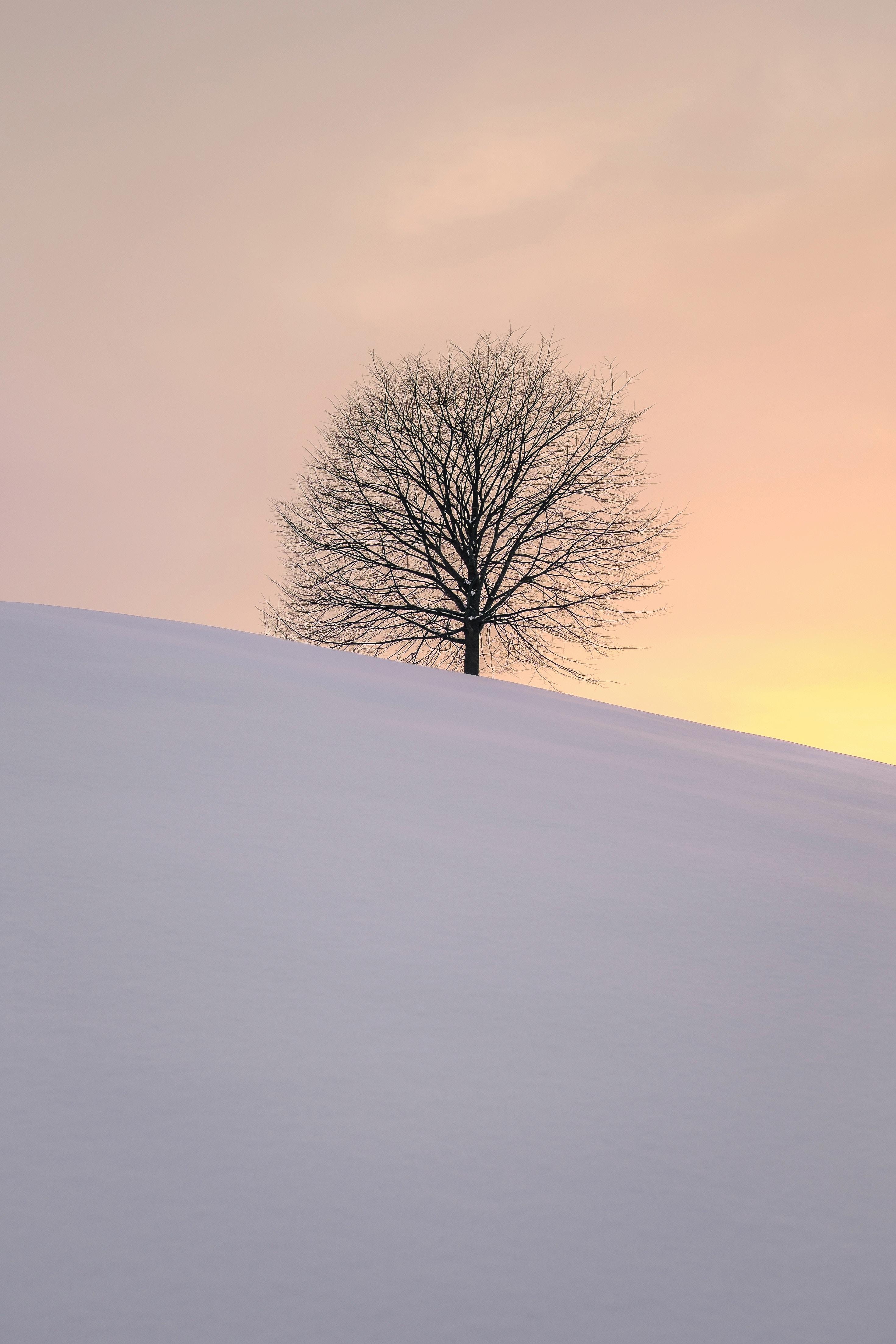 122685 Hintergrundbild herunterladen Winterreifen, Natur, Schnee, Holz, Baum, Minimalismus, Hügel, Hillock - Bildschirmschoner und Bilder kostenlos