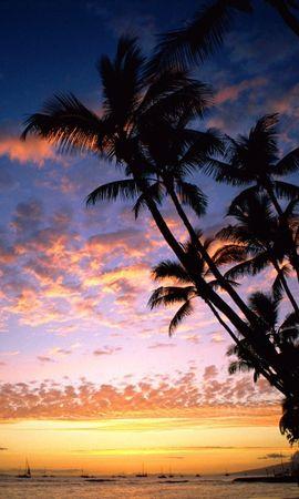 30424 скачать обои Пейзаж, Закат, Море, Пальмы - заставки и картинки бесплатно