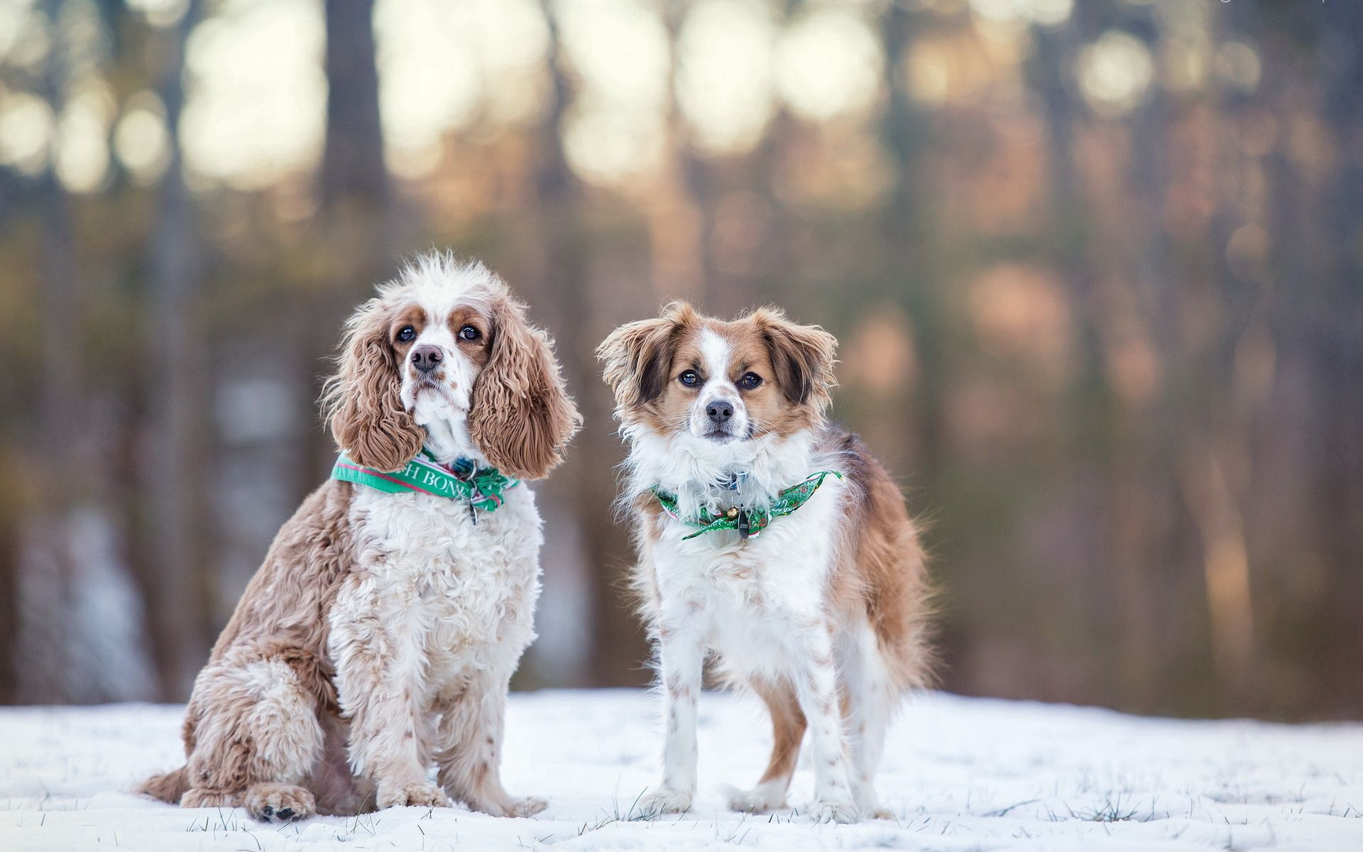 107647 download wallpaper Animals, Dogs, Winter, Snow screensavers and pictures for free