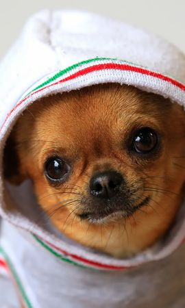 40759 baixar papel de parede Animais, Cães - protetores de tela e imagens gratuitamente