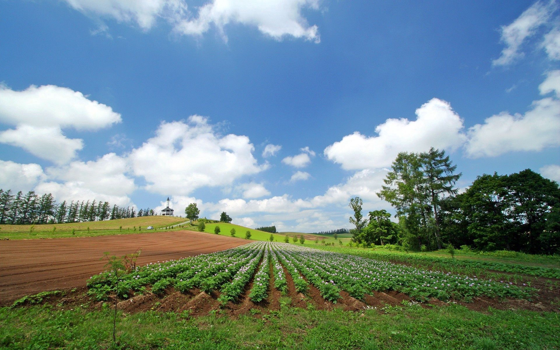 52624 download wallpaper Nature, Summer, Field, Plantation, Rows, Ranks, Culture, Farm, Economy screensavers and pictures for free