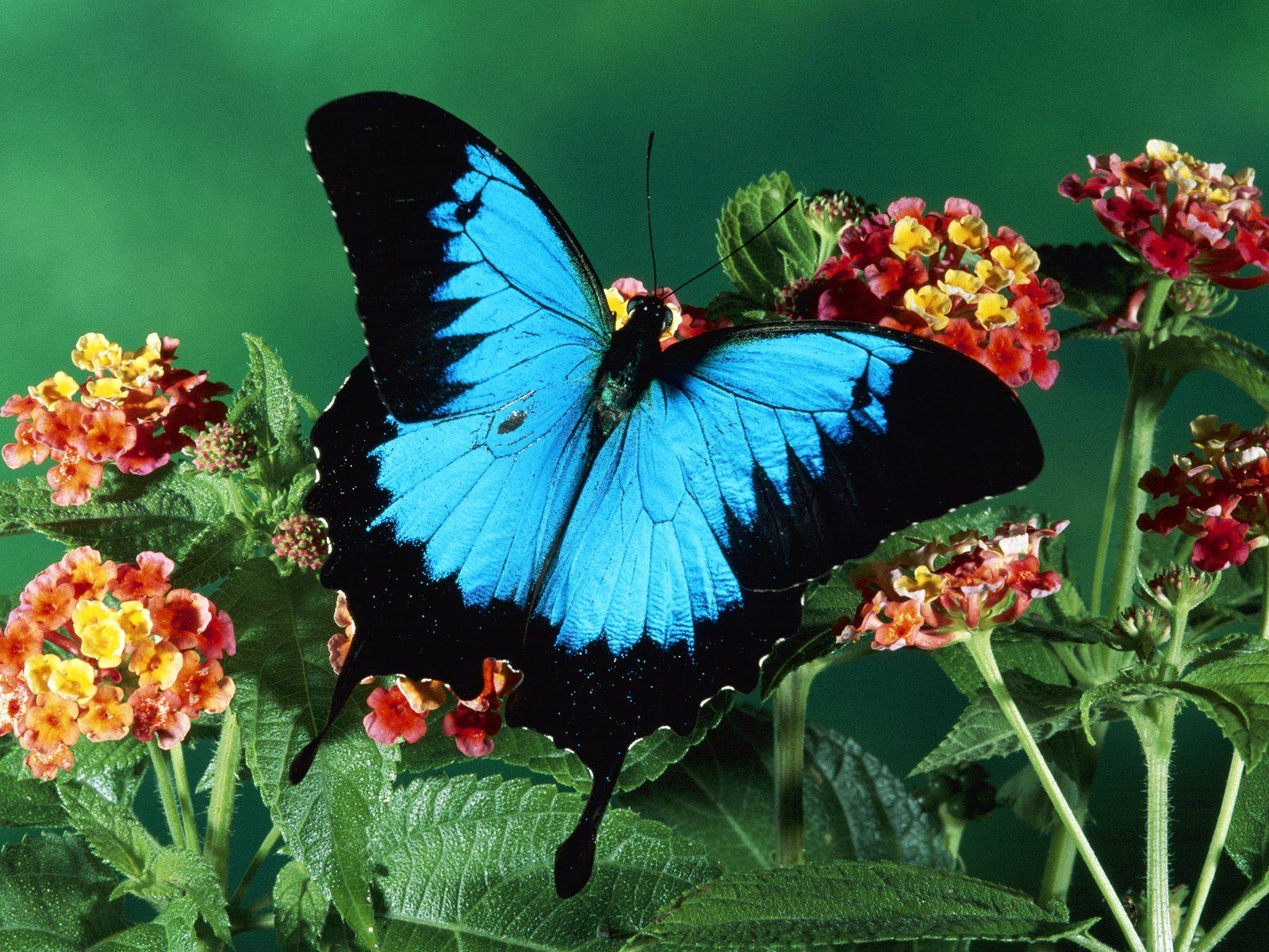 7 download wallpaper Plants, Insects, Butterflies screensavers and pictures for free