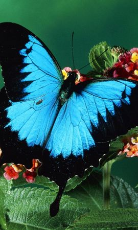 7 Screensavers and Wallpapers Insects for phone. Download Plants, Butterflies, Insects pictures for free