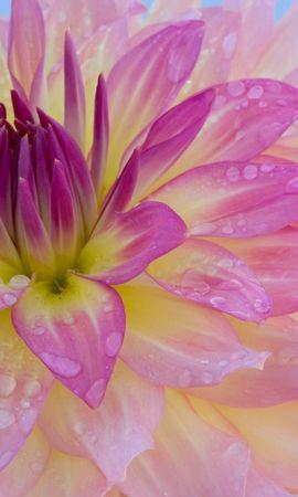 2625 скачать обои Растения, Цветы - заставки и картинки бесплатно