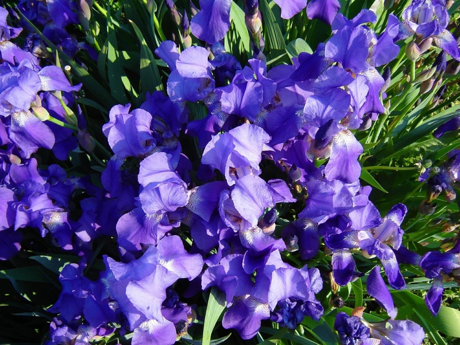 3430 скачать обои Растения, Цветы - заставки и картинки бесплатно