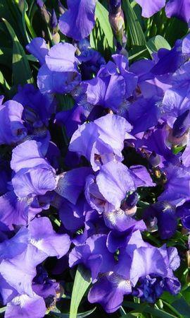 3430 descargar fondo de pantalla Plantas, Flores: protectores de pantalla e imágenes gratis