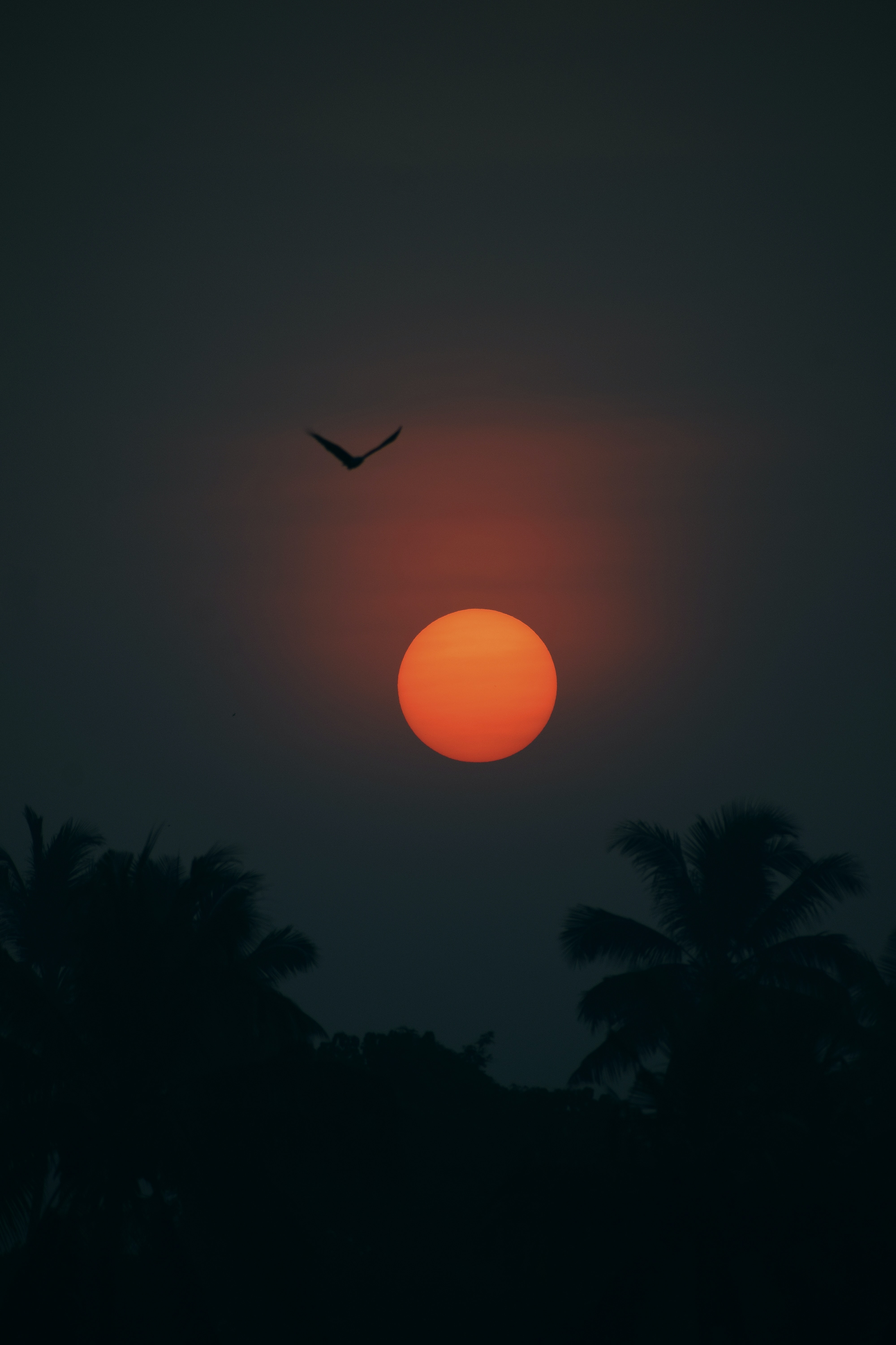 138127 download wallpaper Dark, Bird, Silhouette, Dusk, Twilight, Sun, Palms screensavers and pictures for free
