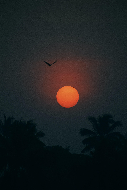 Download mobile wallpaper Dark, Sun, Twilight, Palms, Silhouette, Bird, Dusk for free.