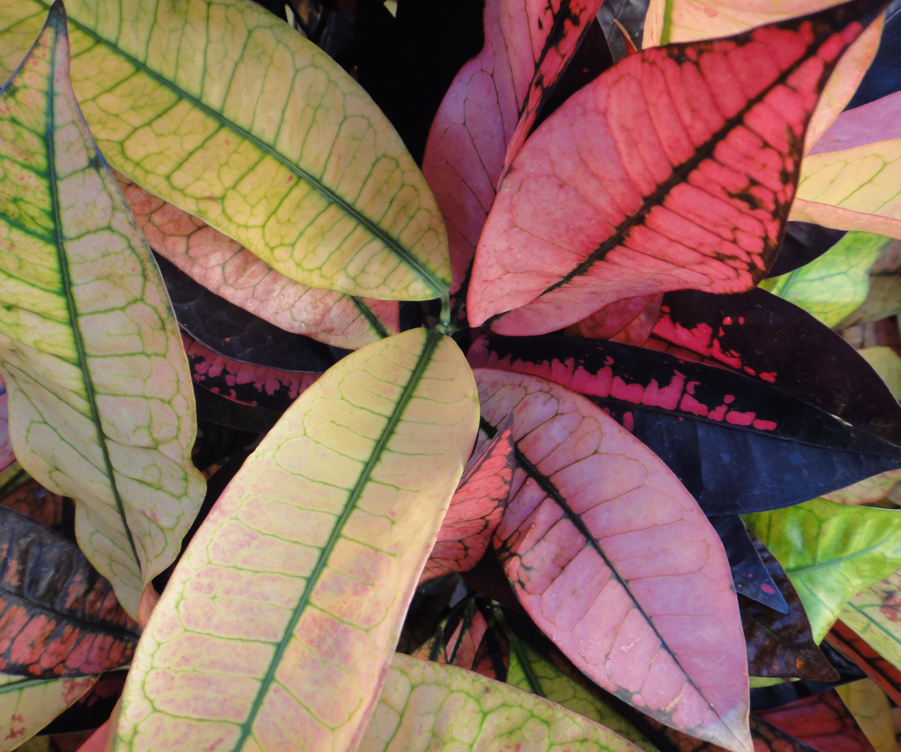 82682 скачать обои Растения, Листья, Природа, Текстура, Линии - заставки и картинки бесплатно