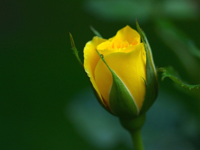 38477 скачать обои Растения, Цветы - заставки и картинки бесплатно