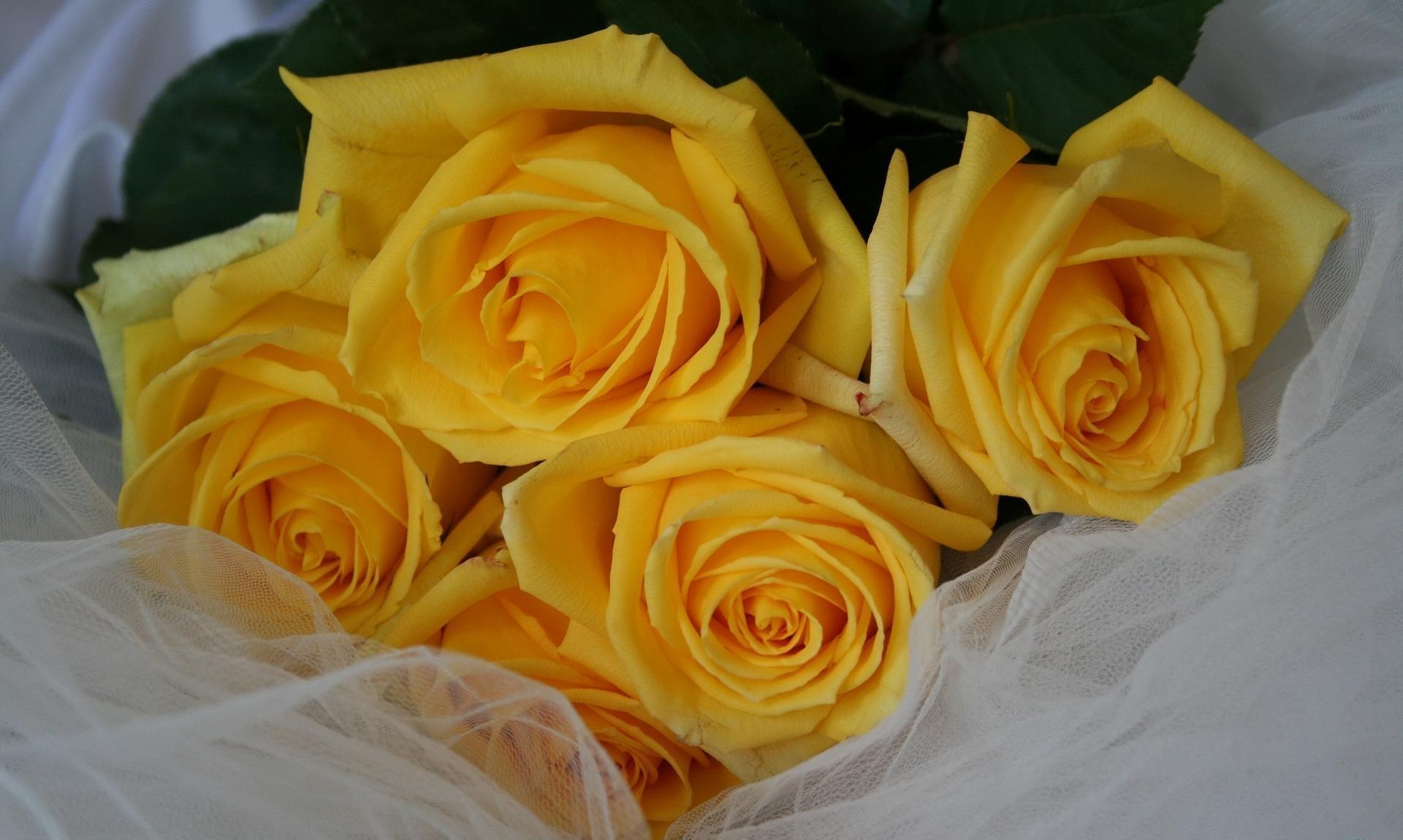 101852 скачать обои Цветы, Букет, Лежать, Сетка, Розы - заставки и картинки бесплатно