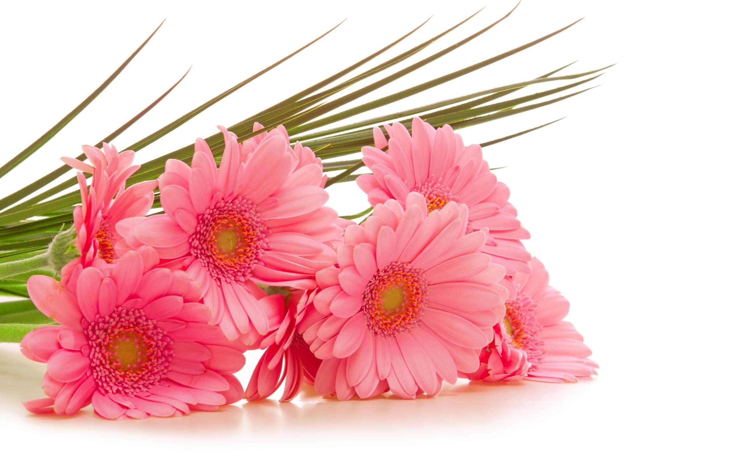 28695 скачать обои Растения, Цветы, Букеты - заставки и картинки бесплатно