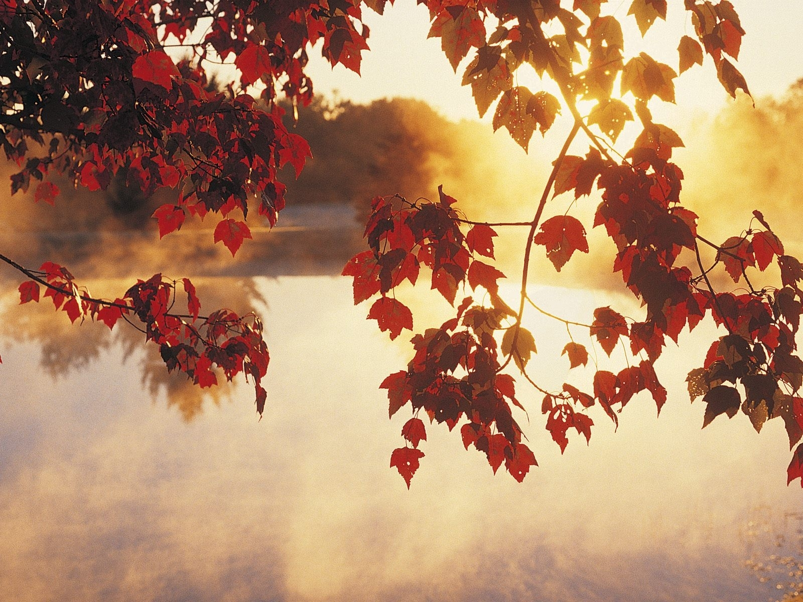 491 download wallpaper Plants, Water, Sunset, Autumn, Leaves, Sun screensavers and pictures for free