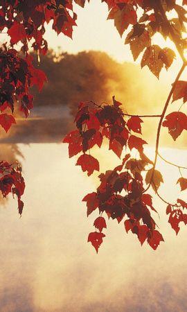 491 скачать обои Растения, Вода, Закат, Осень, Листья, Солнце - заставки и картинки бесплатно