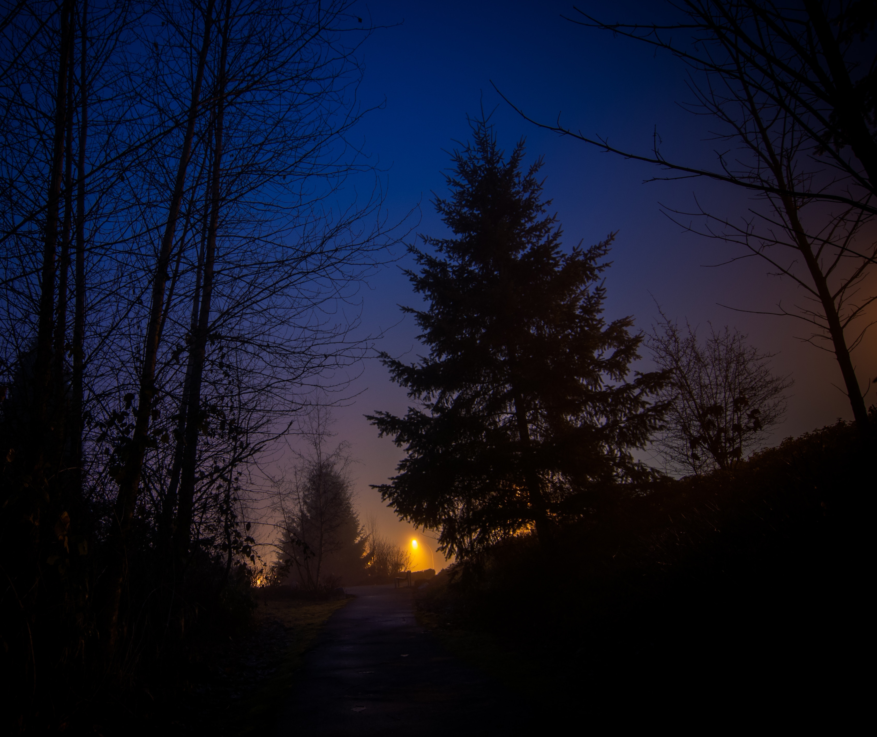 71011 free wallpaper 1080x2340 for phone, download images Trees, Sky, Night, Dark, Forest, Fog 1080x2340 for mobile