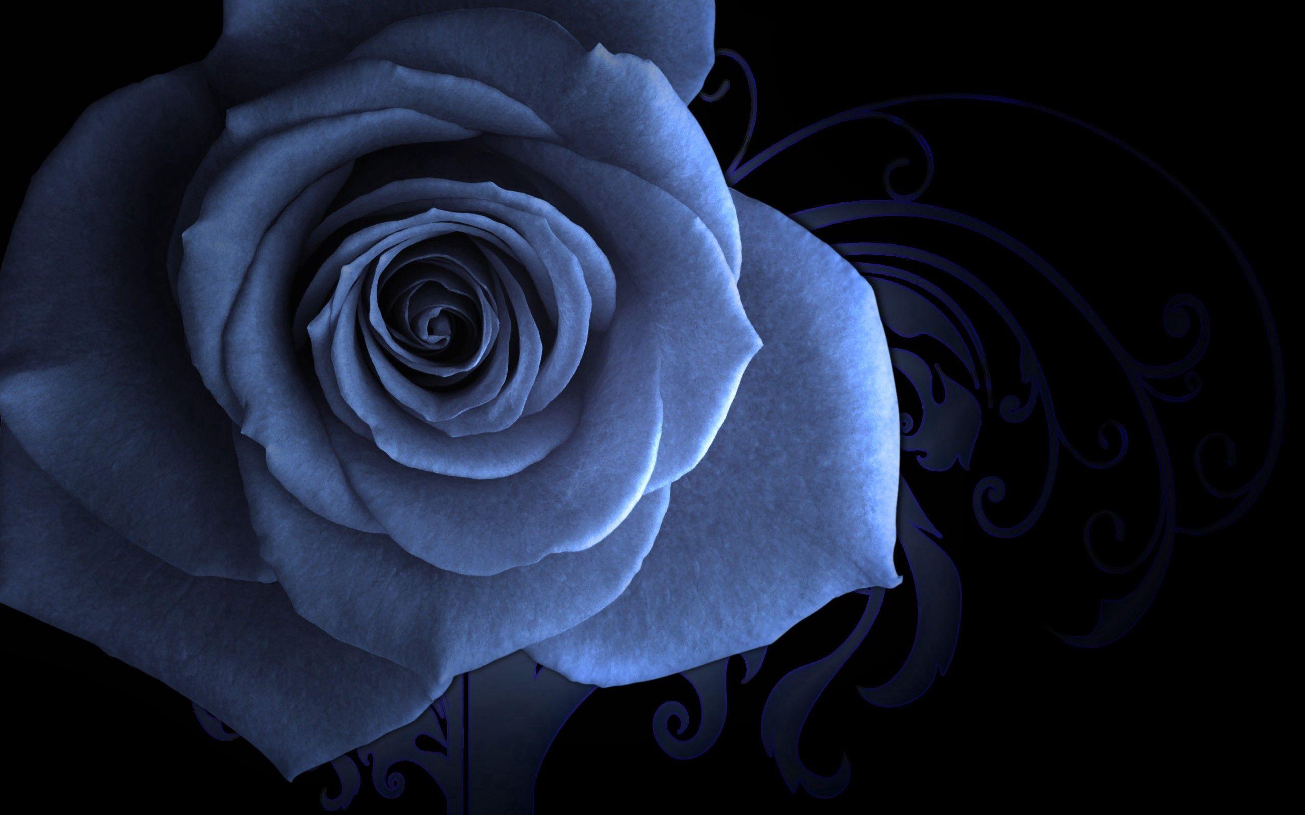 101499 скачать обои Макро, Роза, Цветок, Лепестки, Фон, Узоры - заставки и картинки бесплатно