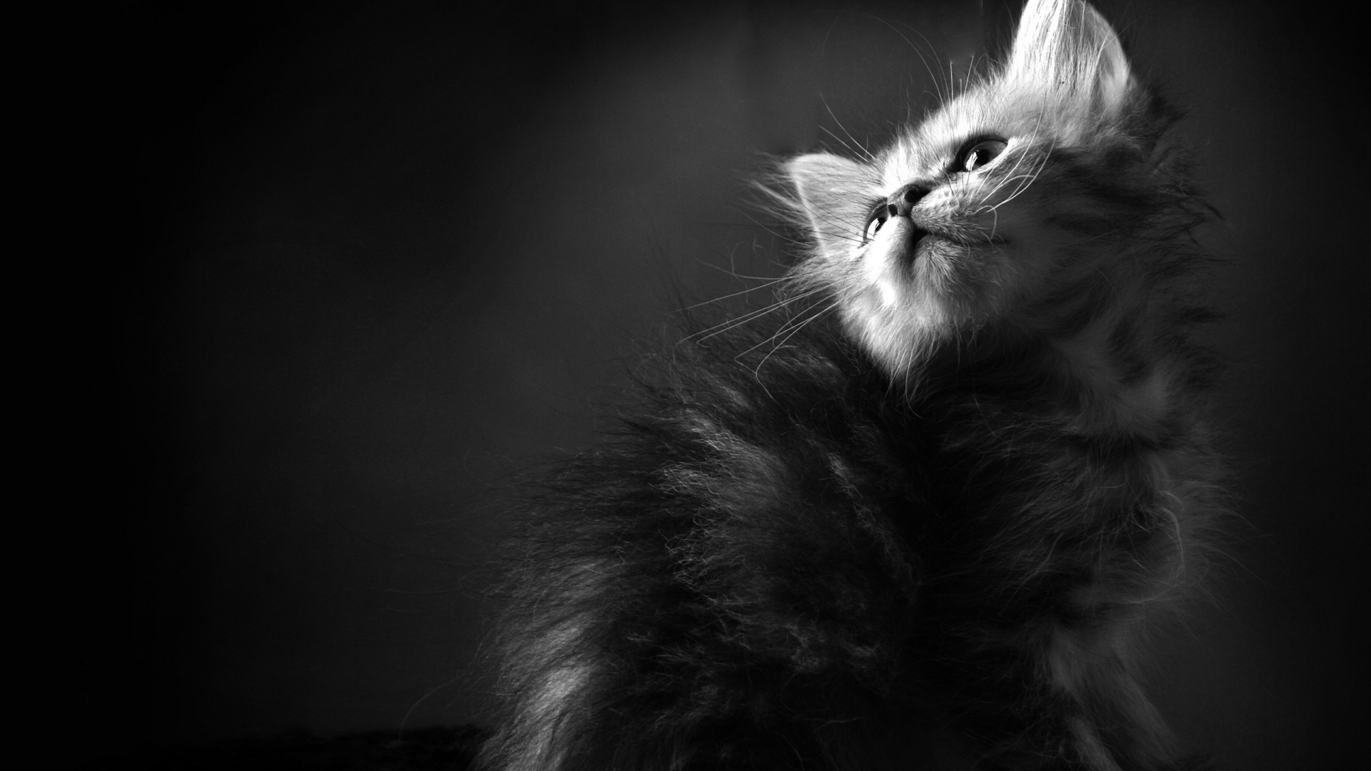 49127 download wallpaper Animals, Cats screensavers and pictures for free