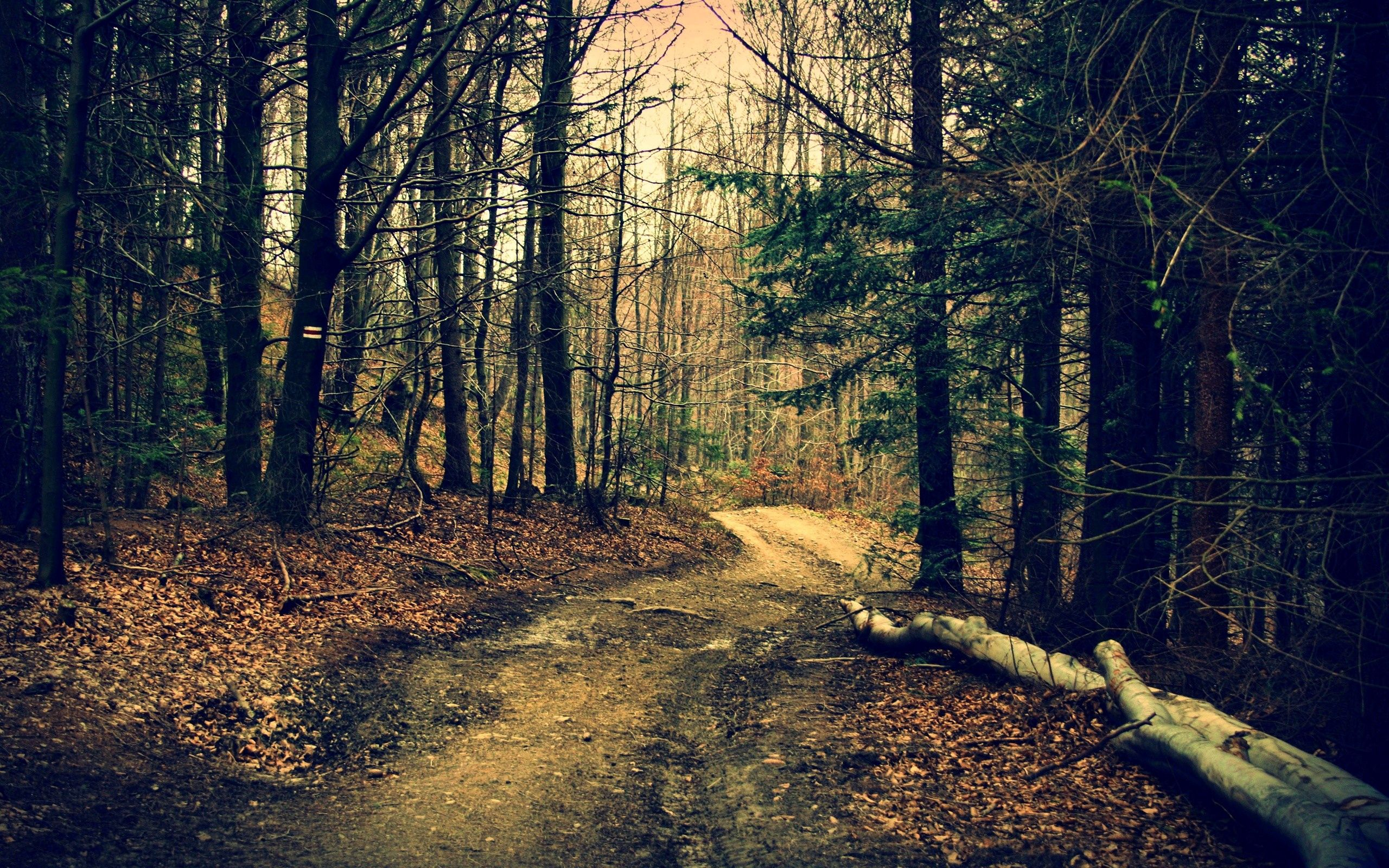 99538 Screensavers and Wallpapers Path for phone. Download Nature, Trees, Summer, Forest, Path pictures for free