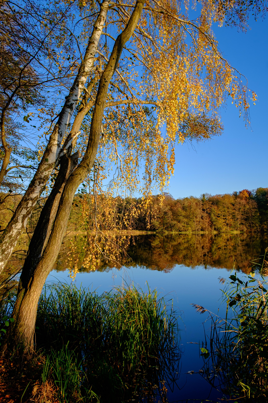 76873 скачать обои Природа, Озеро, Деревья, Осень, Отражение, Пейзаж - заставки и картинки бесплатно