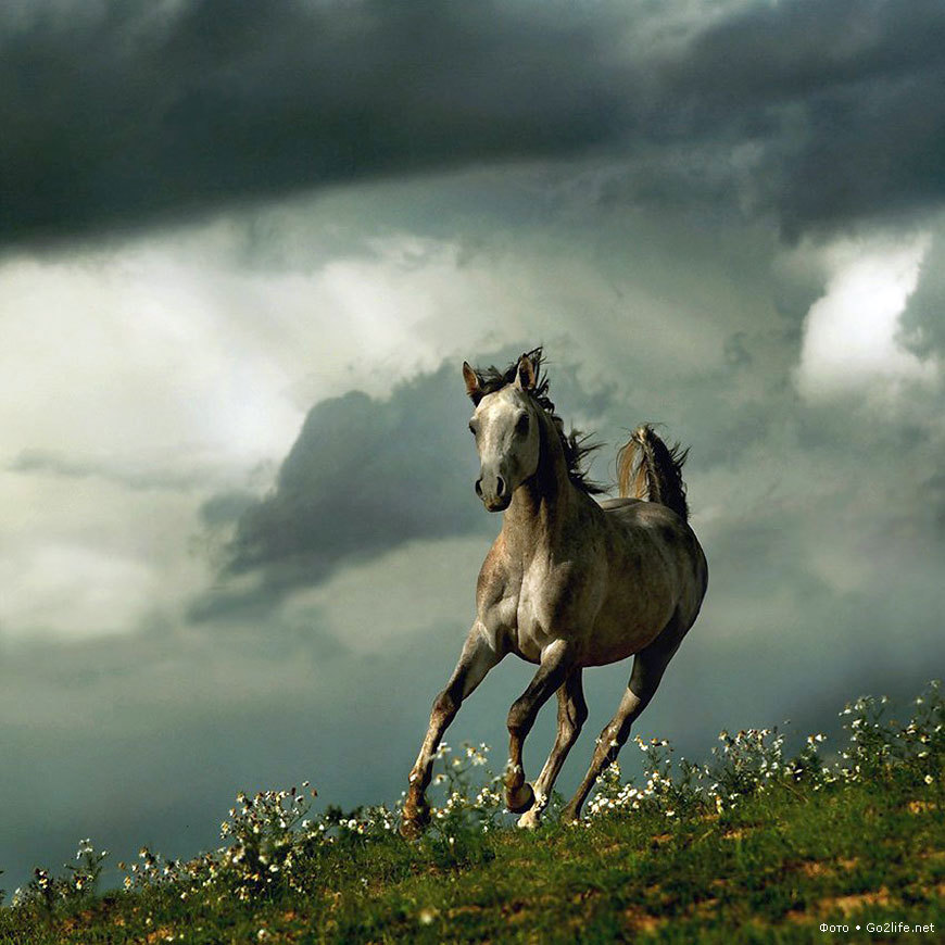 21147 download wallpaper Animals, Horses screensavers and pictures for free