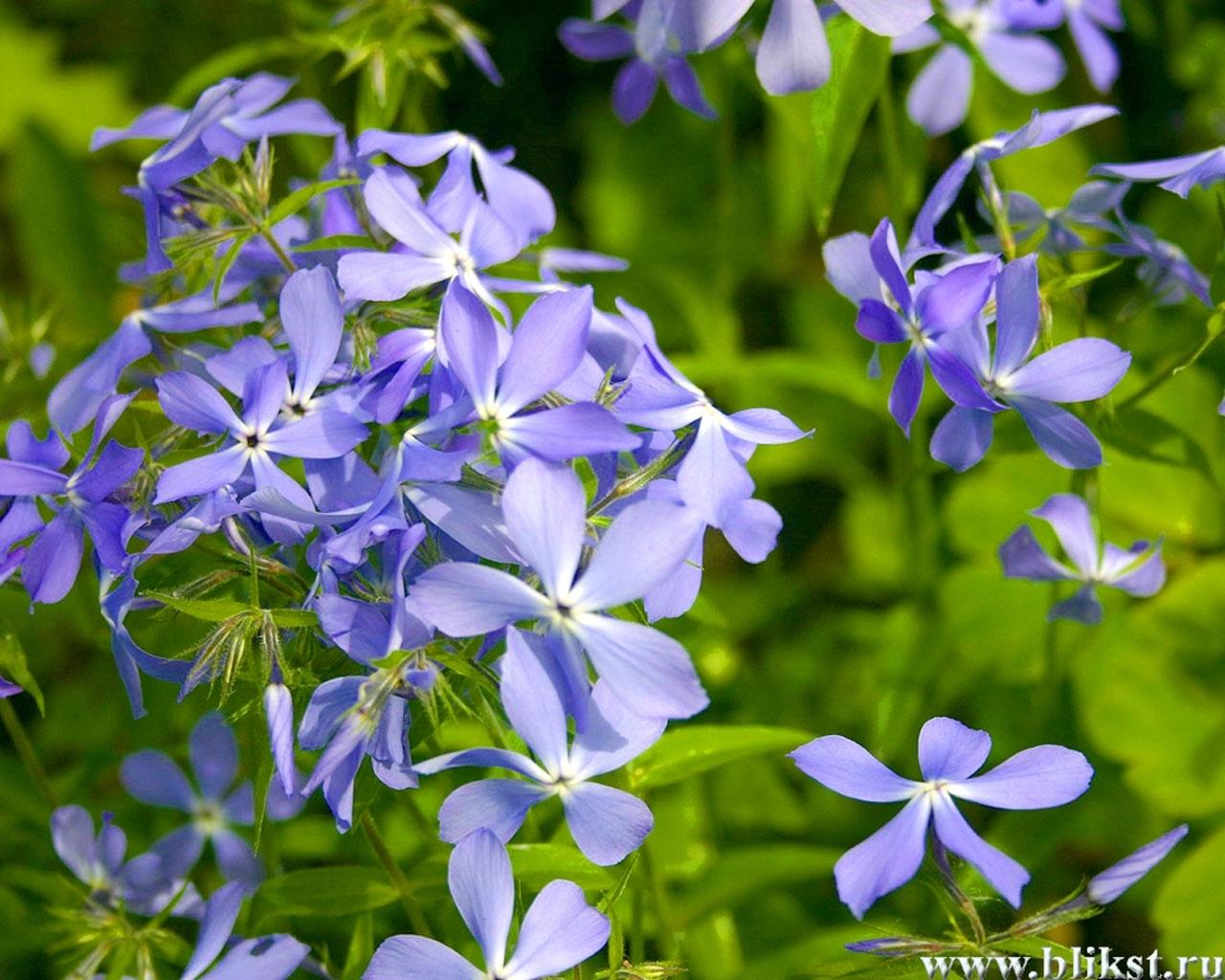 9742 descargar fondo de pantalla Plantas, Flores: protectores de pantalla e imágenes gratis