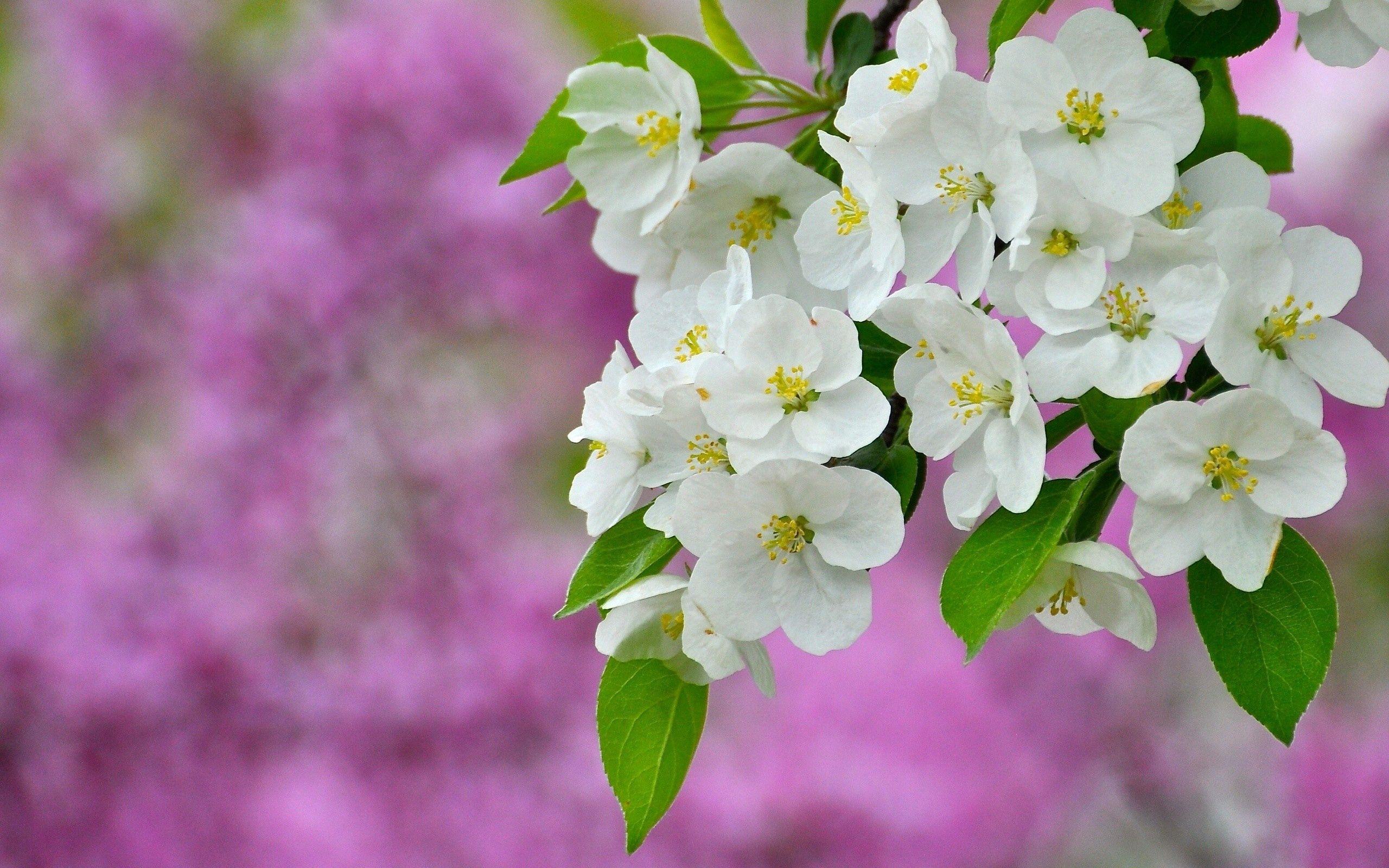 134214 скачать обои Цветы, Растение, Цветение, Макро - заставки и картинки бесплатно