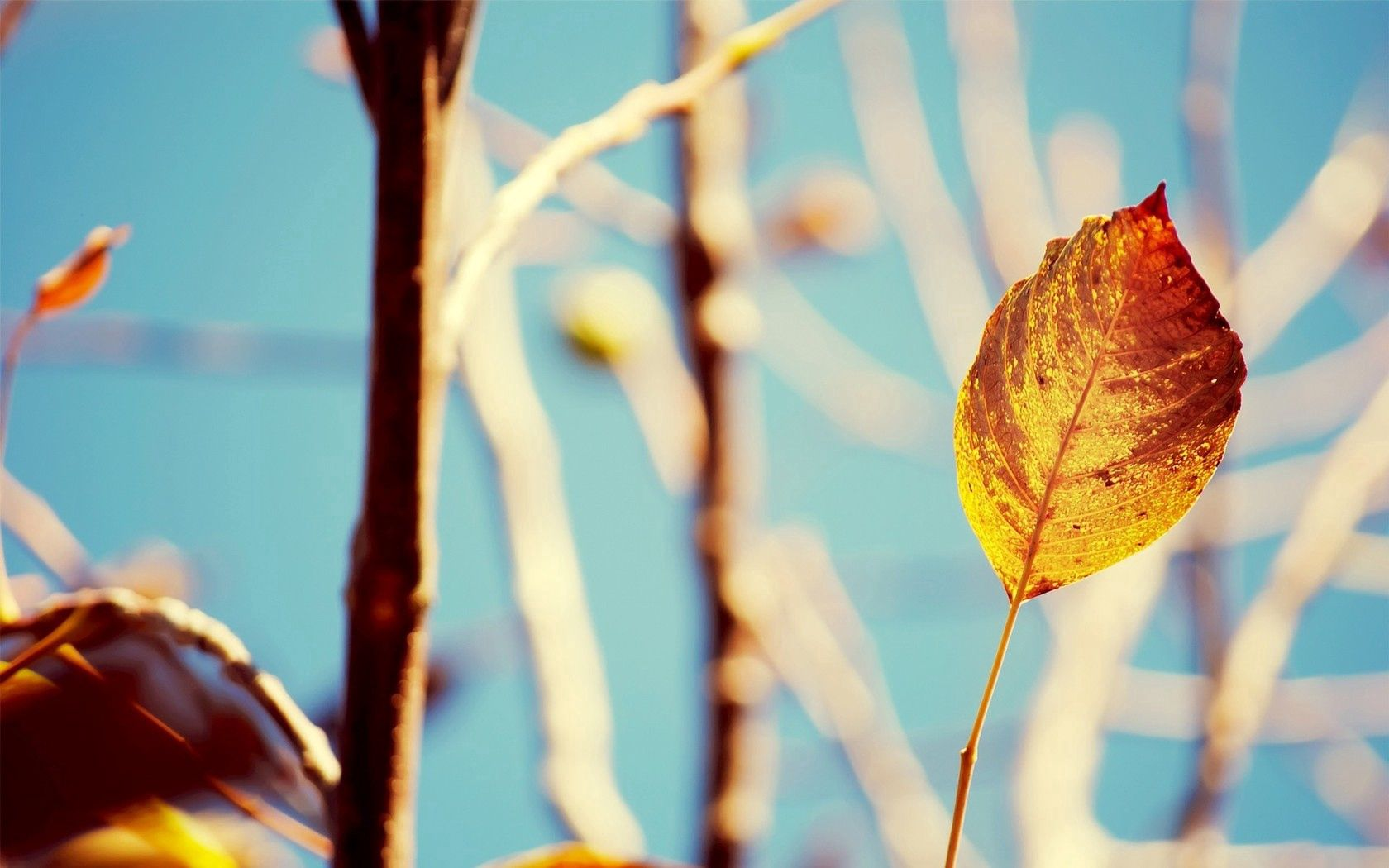 89473 download wallpaper Macro, Branches, Shine, Light, Plant, Autumn, Leaves screensavers and pictures for free