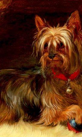 39191 baixar papel de parede Animais, Cães, Imagens - protetores de tela e imagens gratuitamente