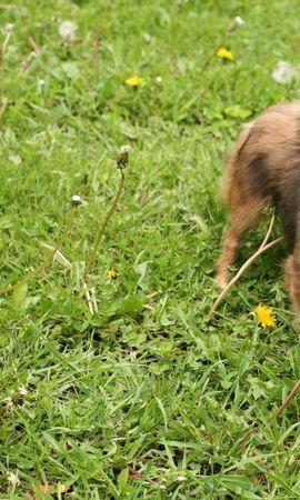 46951 baixar papel de parede Animais, Cães - protetores de tela e imagens gratuitamente