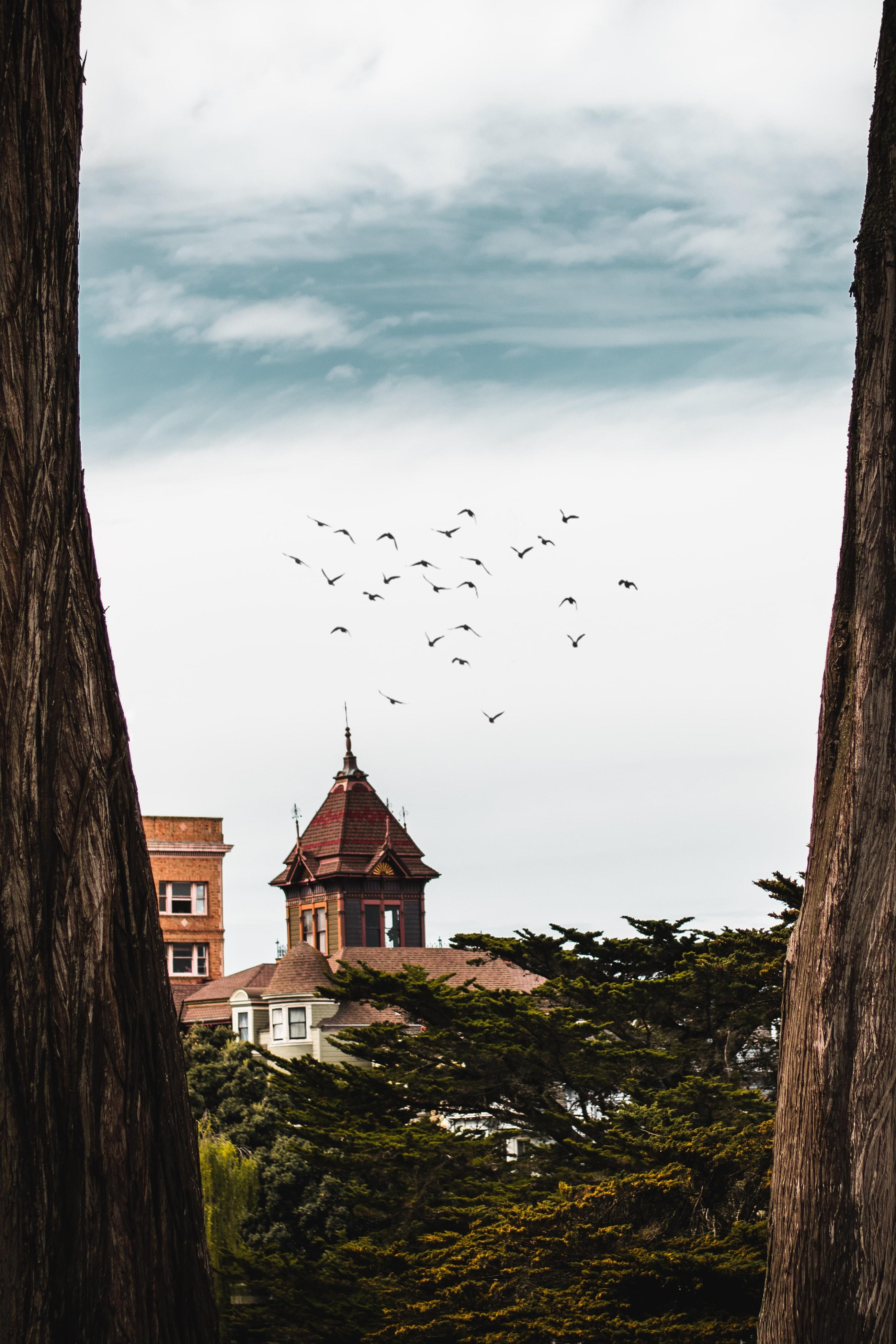144818 скачать обои Деревья, Здания, Природа, Птицы - заставки и картинки бесплатно