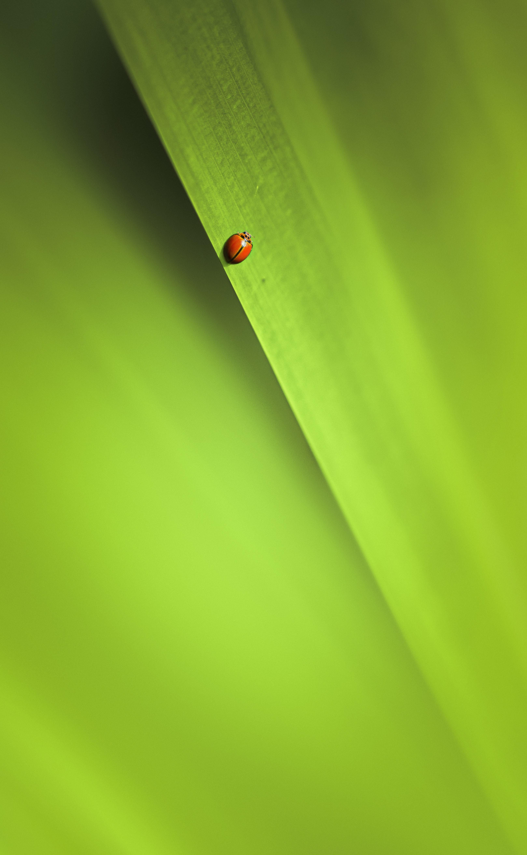 手機的124273屏保和壁紙昆虫。 免費下載 宏, 昆虫, 床单, 工作表, 绿色的 圖片