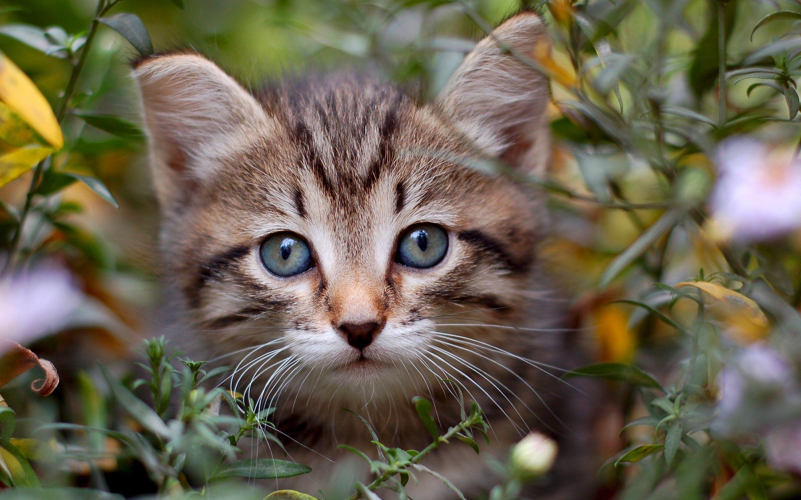 47469 скачать обои Животные, Кошки (Коты, Котики) - заставки и картинки бесплатно