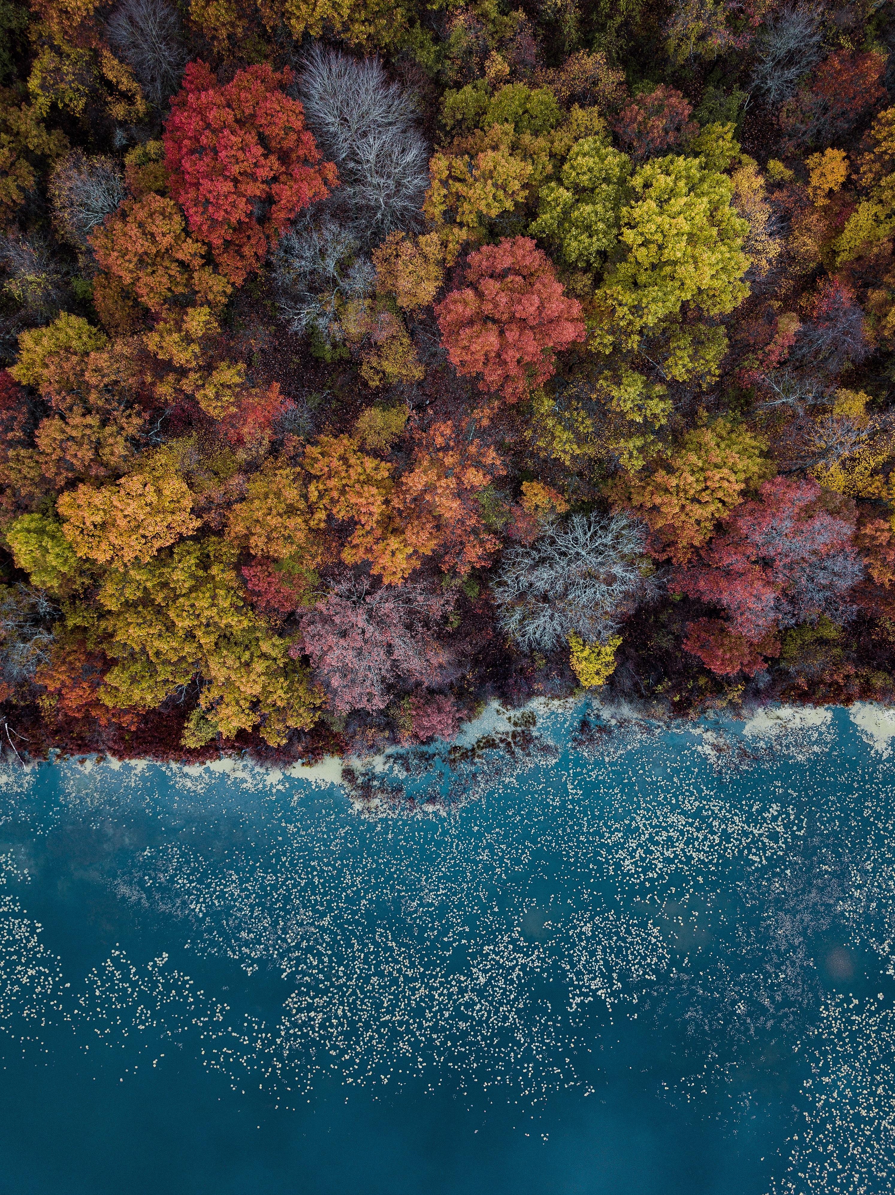 151879 завантажити шпалери Природа, Озеро, Дерева, Вид Зверху, Осінь, Барви Осені, Осінні Фарби - заставки і картинки безкоштовно