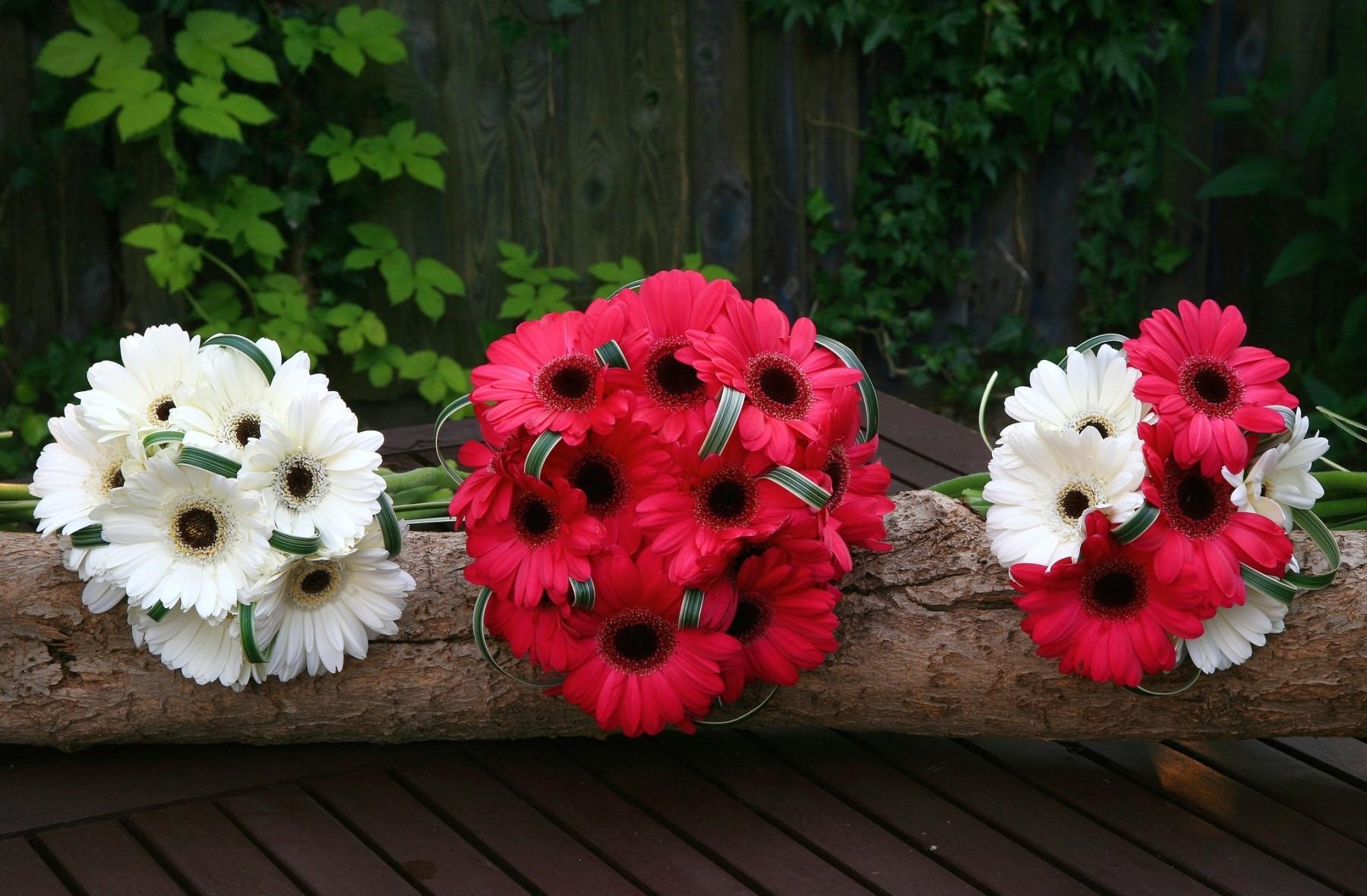 125509 download wallpaper Flowers, Log, Gerberas, Bouquets screensavers and pictures for free