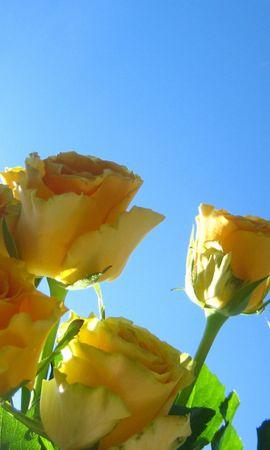 4324 скачать обои Растения, Цветы, Розы - заставки и картинки бесплатно
