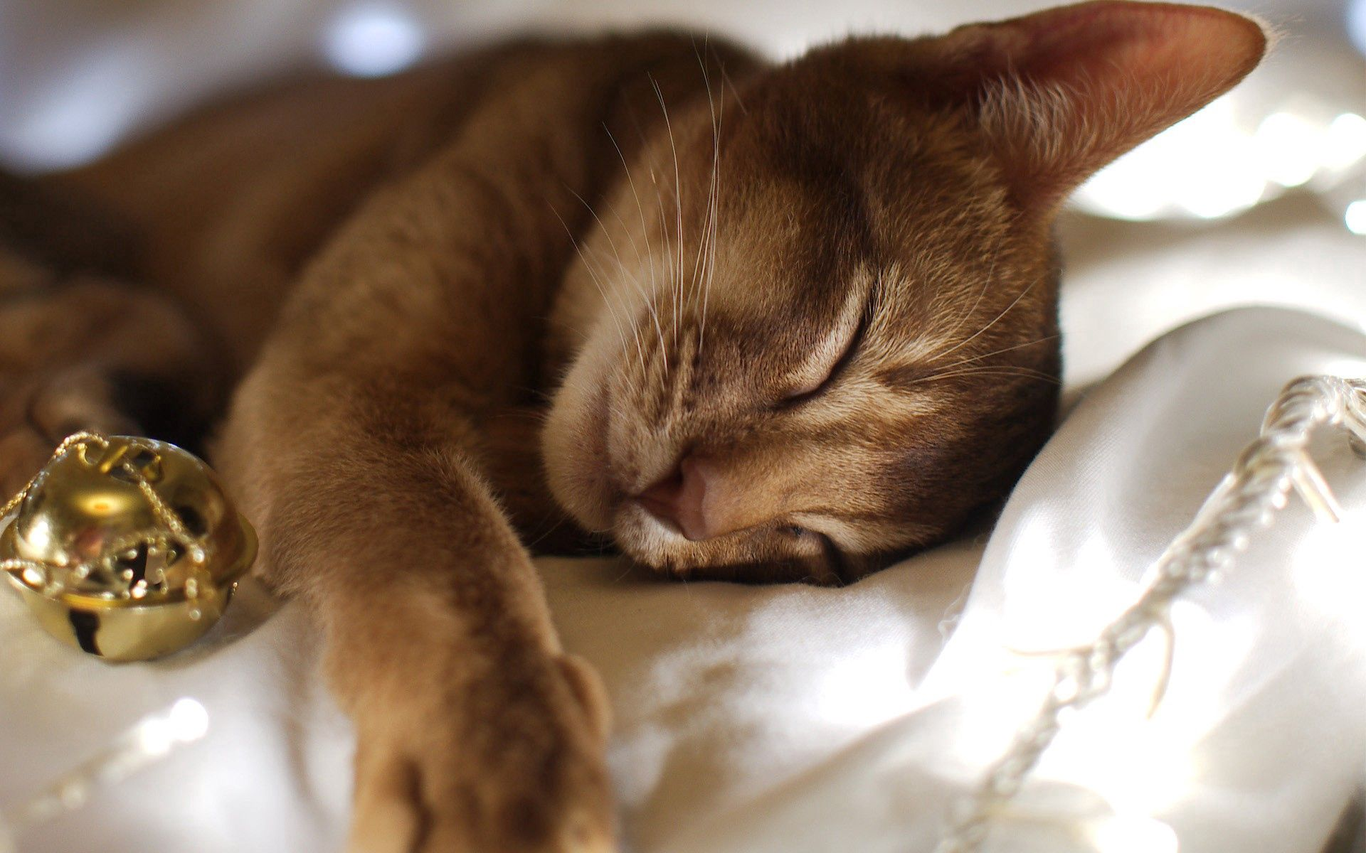 60419 download wallpaper Animals, Cat, To Lie Down, Lie, Muzzle, Sight, Opinion screensavers and pictures for free