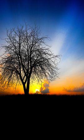 25173 скачать обои Пейзаж, Деревья, Закат - заставки и картинки бесплатно