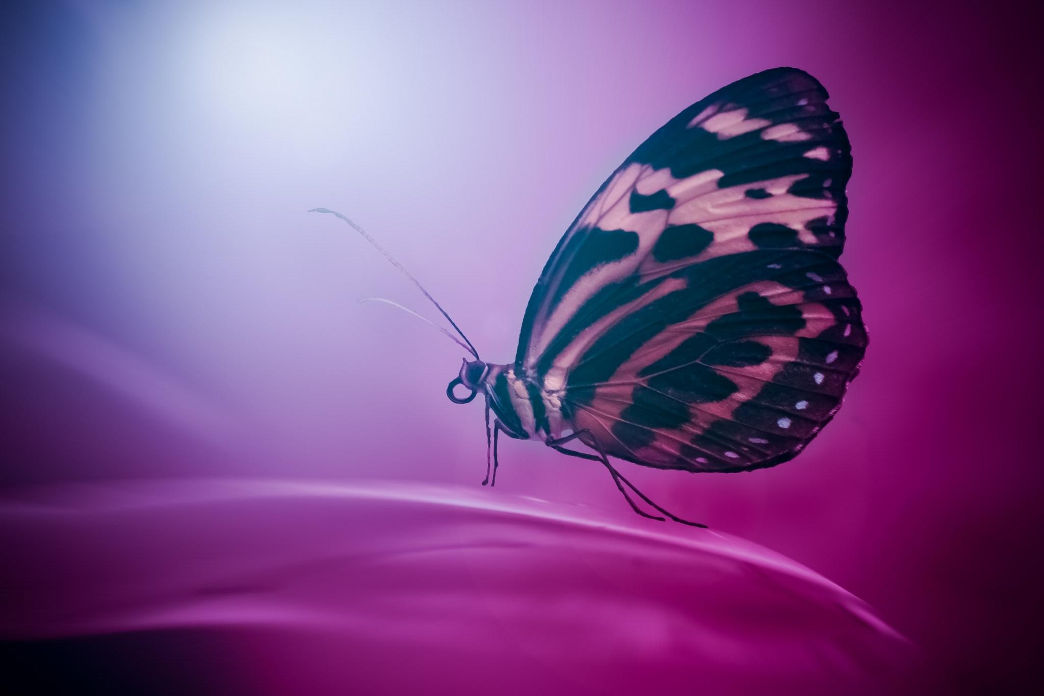 82140 免費下載壁紙 宏, 蝴蝶, 翅膀, 表面, 花瓣 屏保和圖片