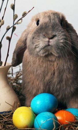 49170 descargar fondo de pantalla Vacaciones, Animales, Conejos: protectores de pantalla e imágenes gratis