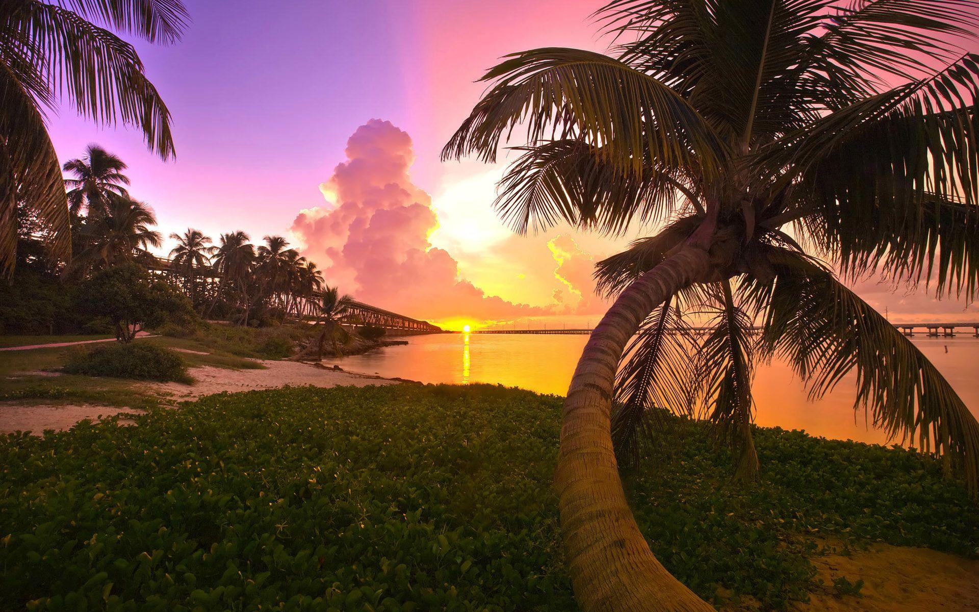 110898 télécharger le fond d'écran Nature, Coucher De Soleil, Mer, Paysage, Palms - économiseurs d'écran et images gratuitement