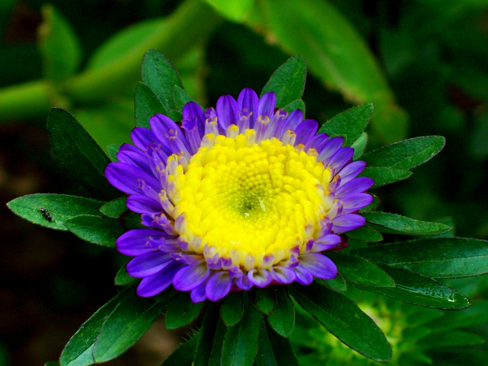 4307 download wallpaper Plants, Flowers screensavers and pictures for free