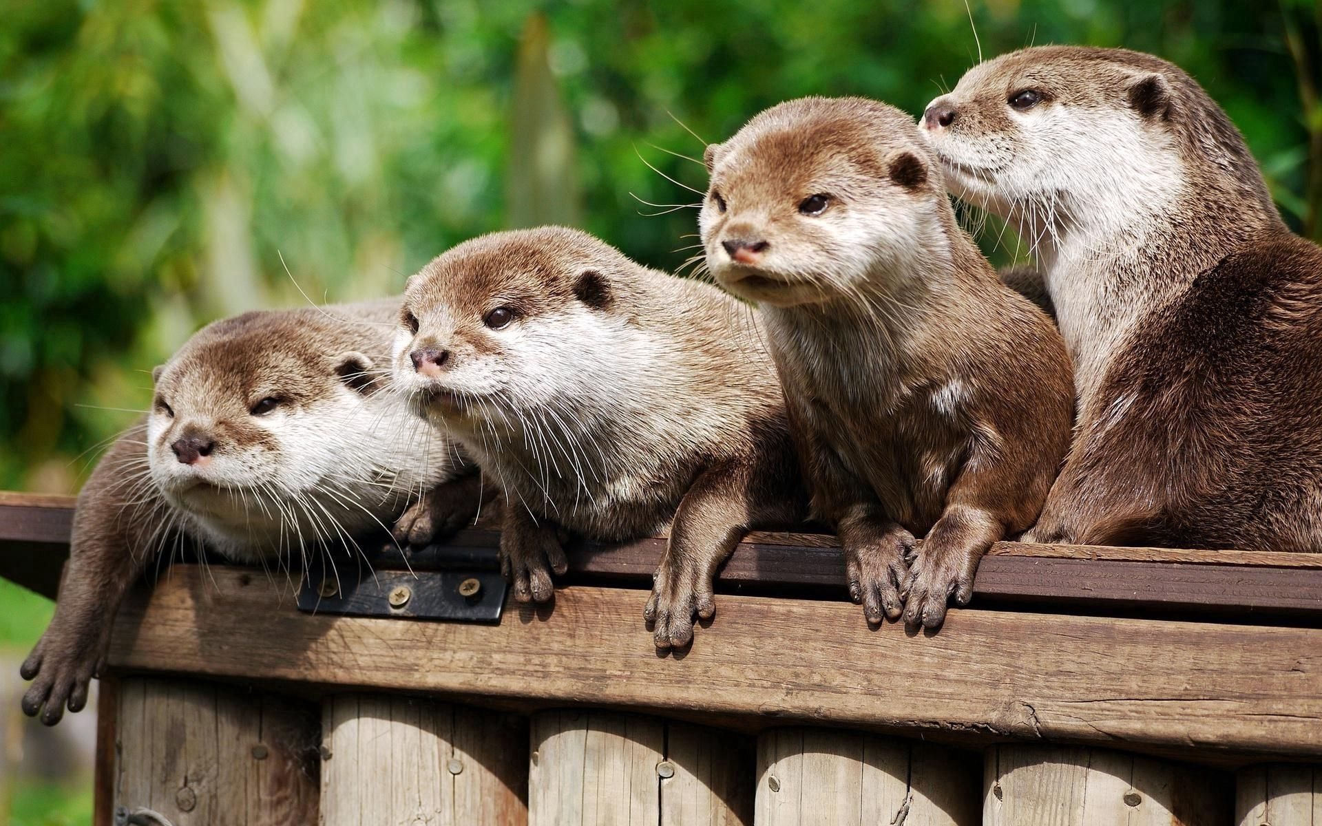 84378 free wallpaper 720x1280 for phone, download images Animals, Otters, Logs 720x1280 for mobile