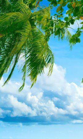 27784 скачать обои Пейзаж, Море, Облака, Пальмы - заставки и картинки бесплатно